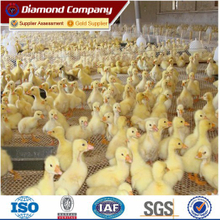 PVC Chicken Mesh / PVC hexagonal chicken mesh/Chicken mesh